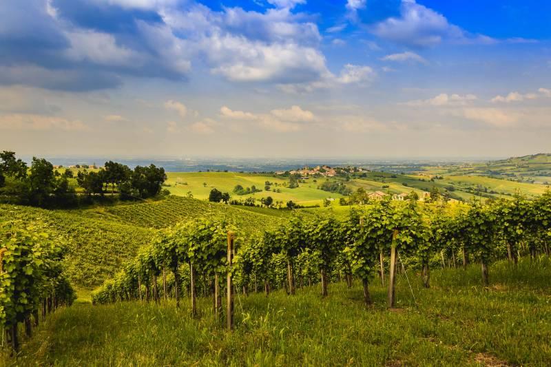 Vigne Piacenza 800x533 - Andar per valli; la provincia di Piacenza un territorio da scoprire