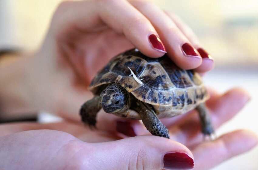 Come allevare correttamente le tartarughe di terra e di acqua