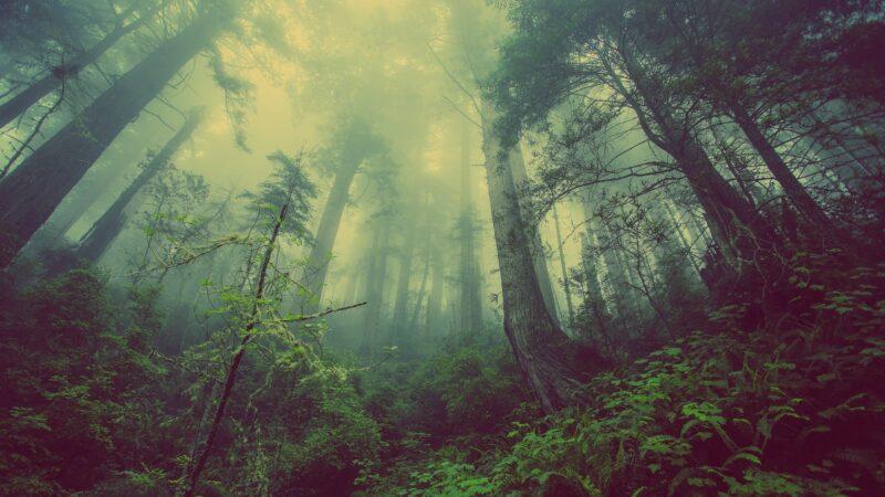 Parco di Bosco Romagno 800x450 - I luoghi più misteriosi del mondo - 10 curiosità per le vacanze