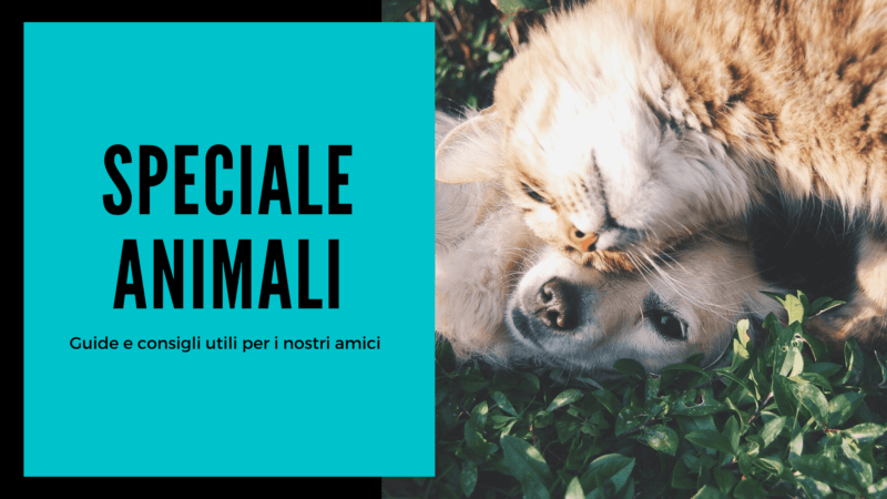 Speciale Animali 800x450 - Rete News - News guide e consigli su Cucina, Turismo e tanto altro....