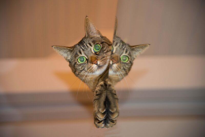 nomi gatti indiani 1 800x534 - Nomi per gatti indiani e di indiani d'America