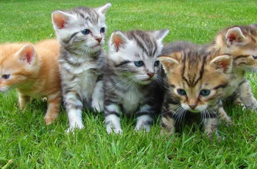 Speciale Gatti – consigli, curiosità e istruzioni per curare il vostro gatto
