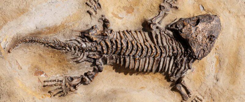 strane creature di tracy chevalier dinosauro 800x333 - Strane creature di Tracy Chevalier il Libro - la recensione
