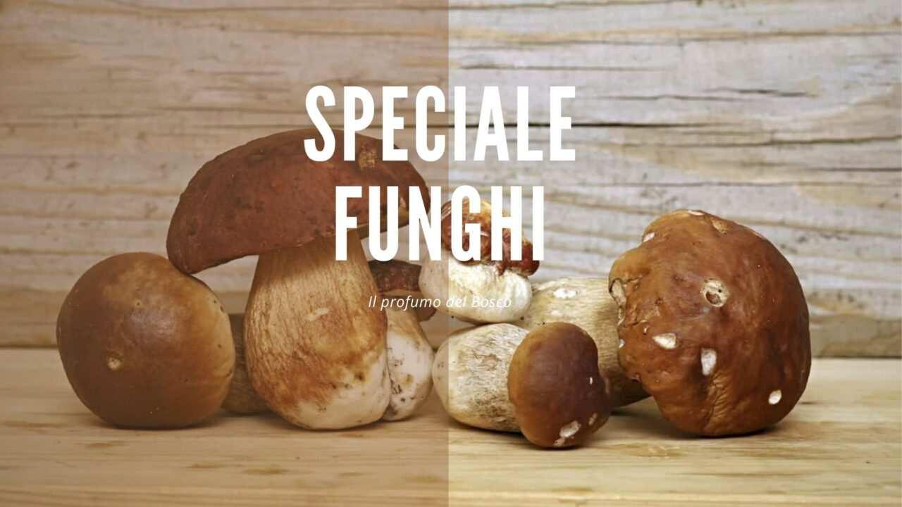 Speciale Funghi scaled - Speciale Funghi consigli su come trovarli e cucinarli