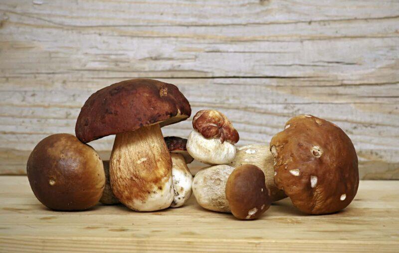 funghi porcini surgelati 800x507 - Come conservare i funghi: guida pratica alla pulizia e conservazione