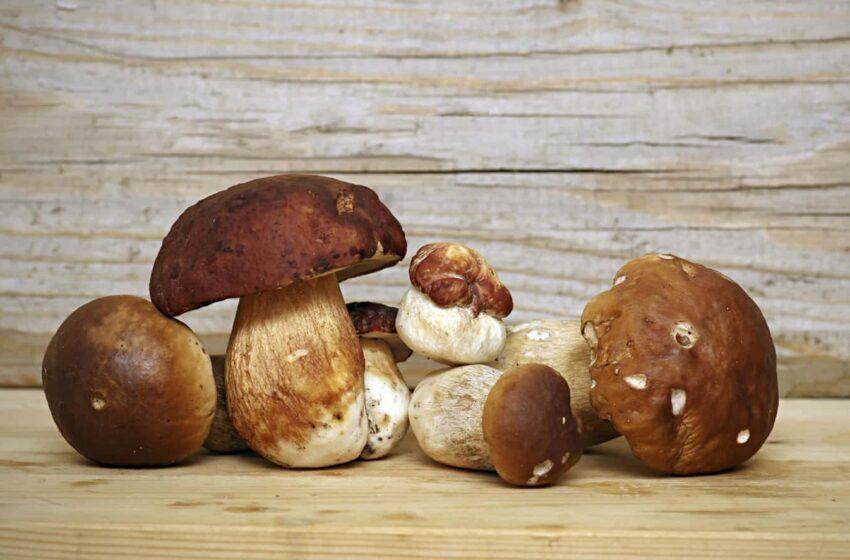 Come conservare i funghi: guida pratica alla pulizia e conservazione