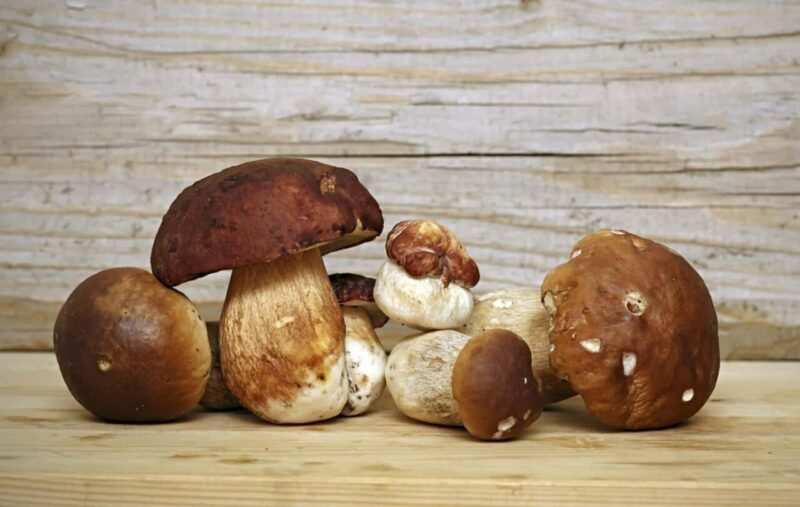 funghi porcini surgelati scaled 800x507 - Come conservare i funghi: guida pratica alla pulizia e conservazione