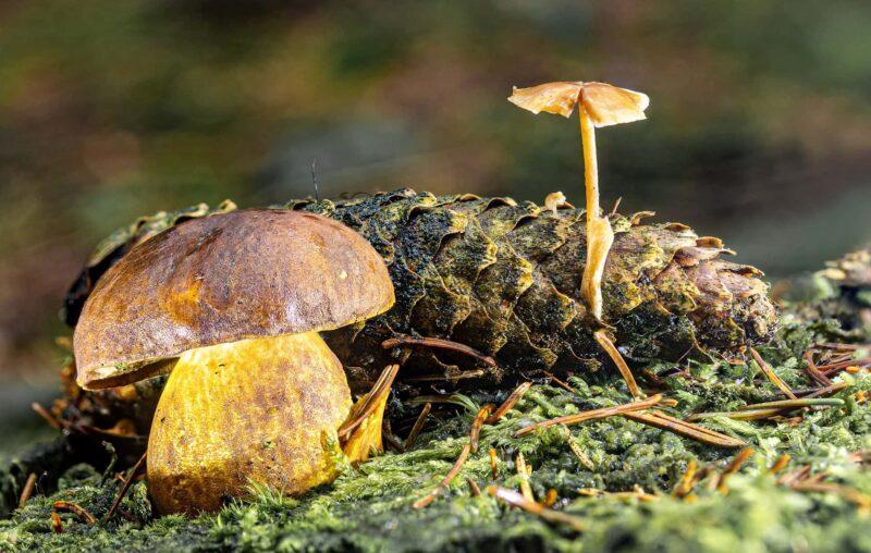 fungo porcino 800x508 - Come conservare i funghi: guida pratica alla pulizia e conservazione
