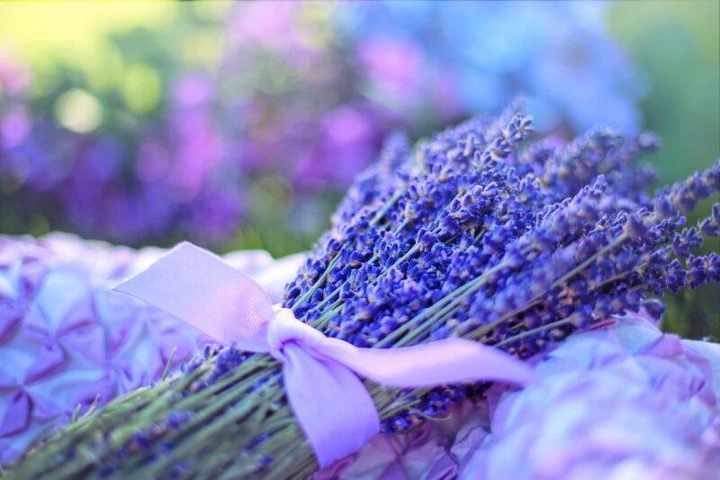 lavanda 800x533 - Cardo mariano ed altre erbe aromatiche: mitologia e leggende