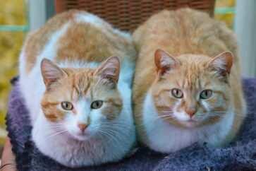nomi coppie di gatti 1 scaled 363x242 - Speciale nomi per gatti maschio e femmina