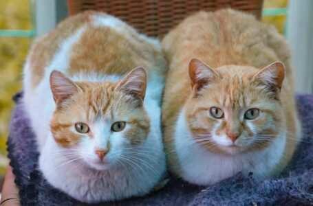 Nomi per coppie di gatti