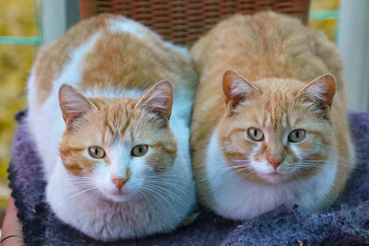 nomi coppie di gatti 1 scaled - Nomi per gatti rari, particolari, russi e coppie
