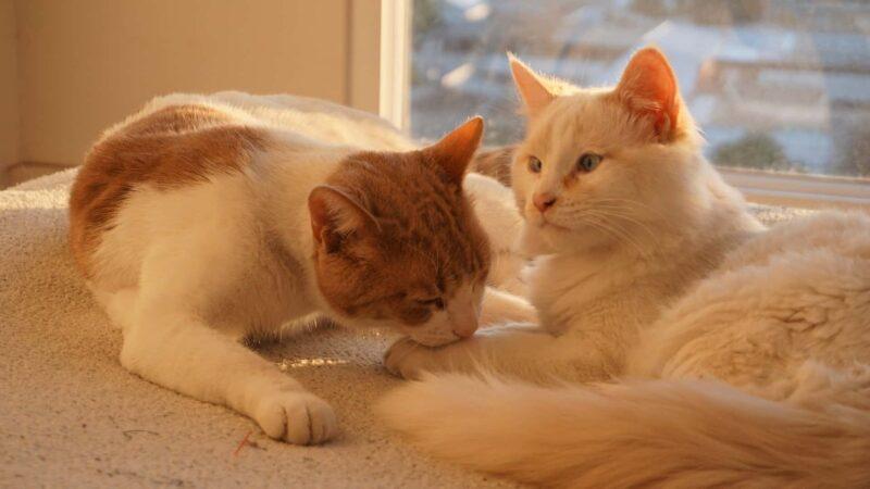 nomi coppie di gatti 800x450 - Nomi per gatti rari, particolari, russi e coppie