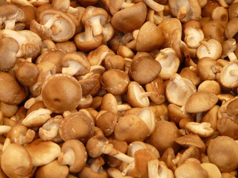 Funghi shiitake 2 800x600 - Funghi shiitake: benefici e come si coltivano