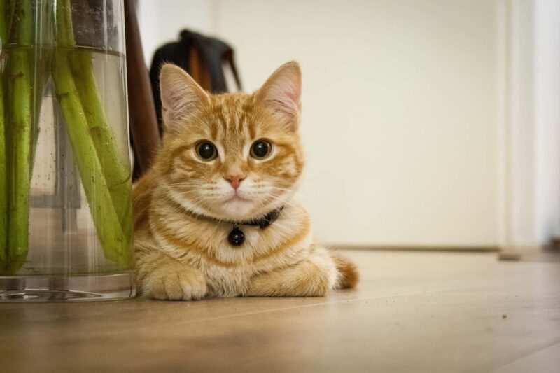 leggende popolari sui gatti gattino 800x533 - Gatti: leggende popolari dal mondo