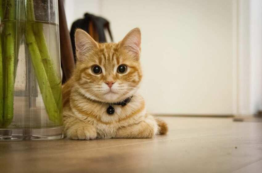 Gatti: leggende popolari dal mondo