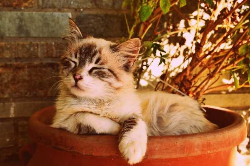 nomi per gatti in tedesco e in francese 1 800x533 - Nomi per gatti in tedesco e in francese