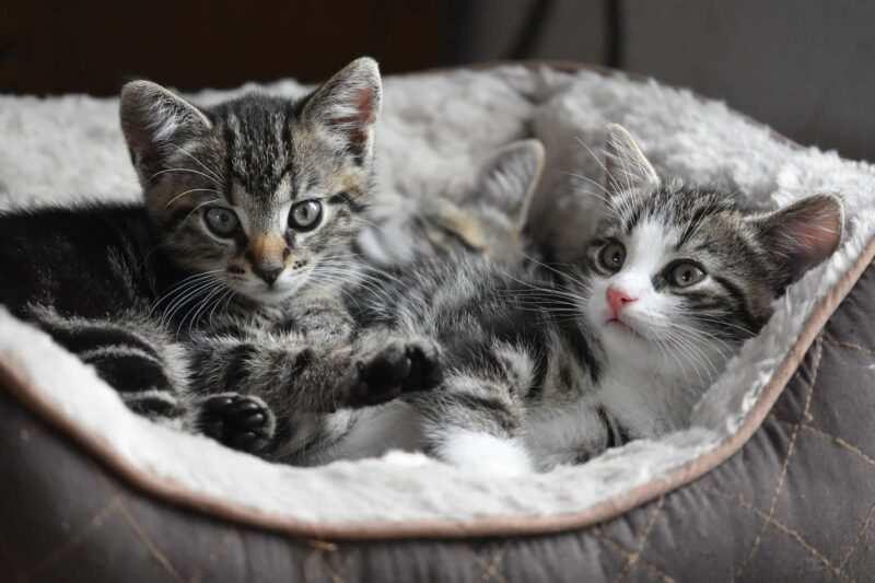 nomi per gatti 800x533 - Nomi per gatti spagnoli e indonesiani