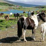 islanda campagna islandese naturaviaggi 150x150 - 20 curiosità sull'Islanda: popolazione, governo e stile di vita