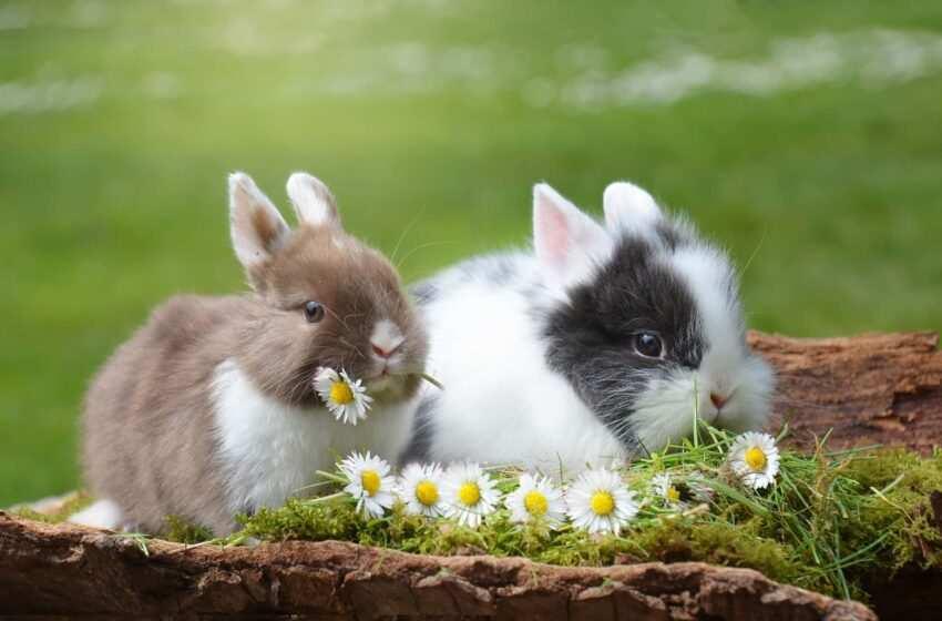 Piante velenose per conigli: quali sono e cosa fare