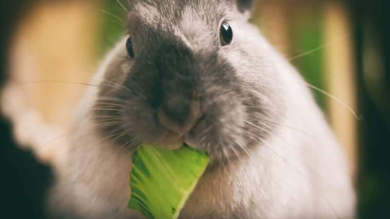 coniglio nano 800x449 - Piante velenose per conigli: quali sono e cosa fare