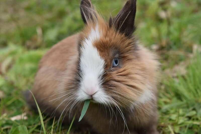 coniglio nano piante velenose 800x533 - Piante velenose per conigli: quali sono e cosa fare