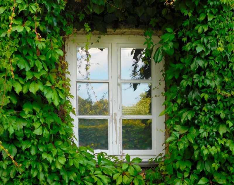 """piante rampicanti 1 800x633 - Piante rampicanti: un """"must"""" senza tempo per la decorazione della casa"""