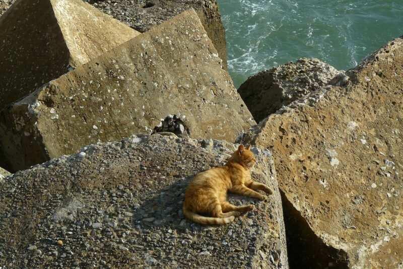 come rinfrescare il gatto destate guida pratica 800x533 - Come rinfrescare il gatto d'estate (guida pratica)