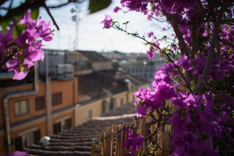 come rendere accogliente il proprio terrazzo fiori 800x533 - Come rendere accogliente il proprio terrazzo