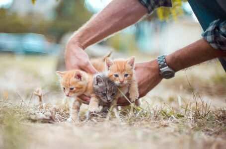 gattini maschio o femmina come riconoscerli