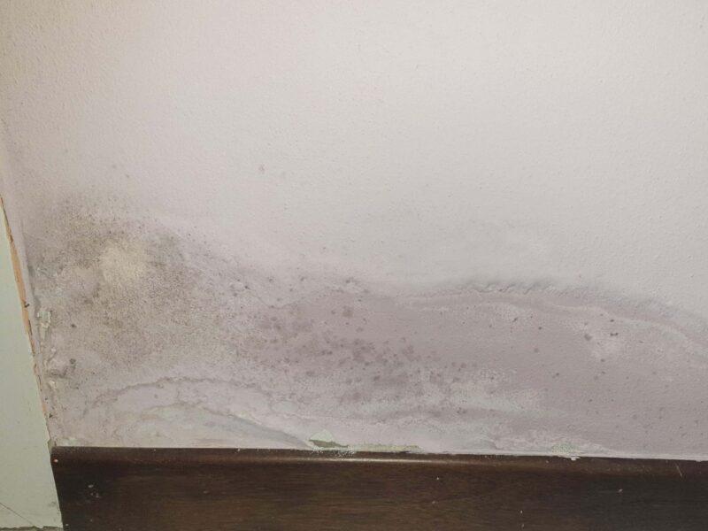 muffa sulle pareti 800x600 - Come eliminare la muffa dai muri