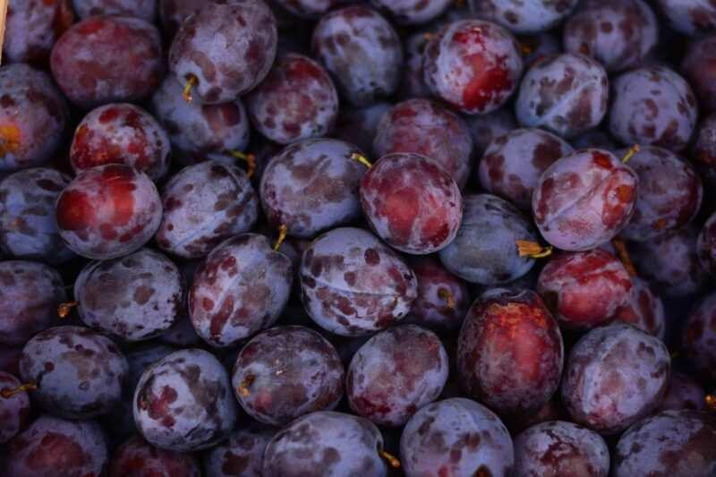 prugne frutta di stagione 800x533 - Frutta di stagione estiva: qual è, proprietà, benefici e come mangiarla