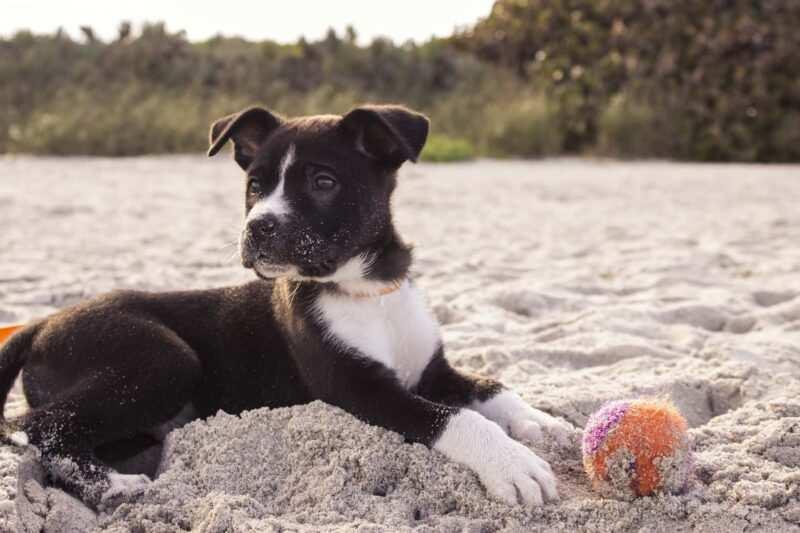 """spiagge per cani 800x533 - Spiaggeper cani """"pet friendly"""" in Italia libere e private dove trovarle"""