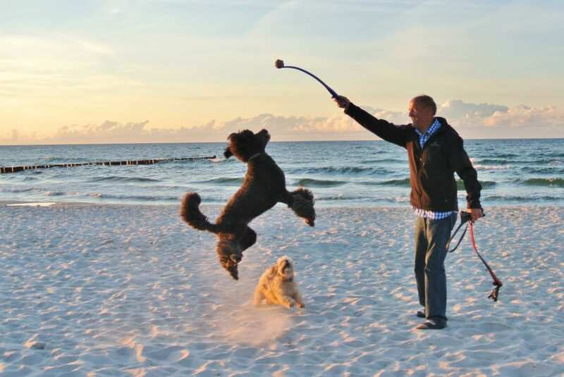 """spiagge per cani in italia 1 800x535 - Spiaggeper cani """"pet friendly"""" in Italia libere e private dove trovarle"""