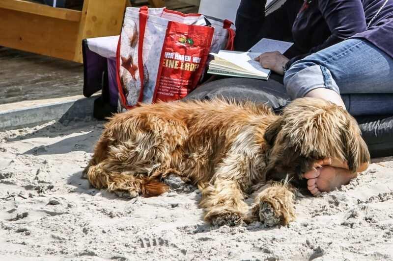 """spiagge per cani in italia 2 800x533 - Spiaggeper cani """"pet friendly"""" in Italia libere e private dove trovarle"""