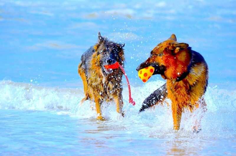 """spiagge per cani pet friendly 800x530 - Spiaggeper cani """"pet friendly"""" in Italia libere e private dove trovarle"""