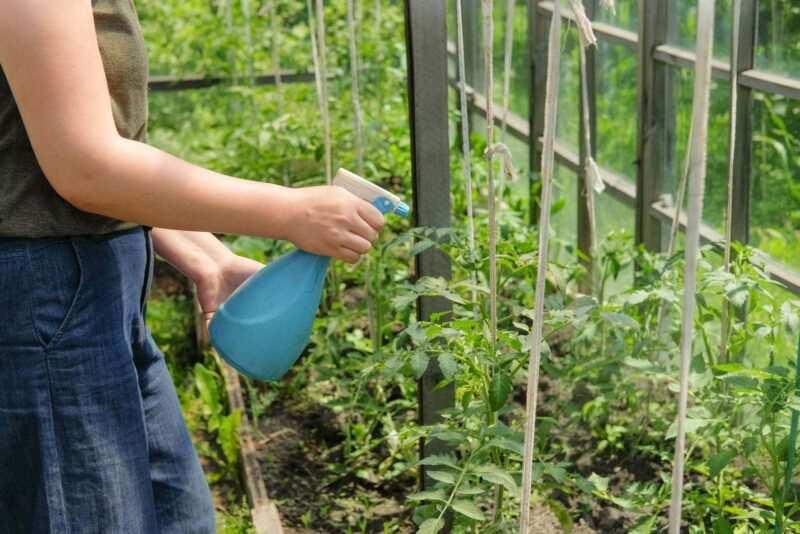 bicarbonato di sodio contro le malattie delle piante 800x534 - Bicarbonato di sodio contro le malattie delle piante